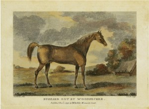 Henry Clay's syndicated stallion Buzzard was originally imported from England where this hand colored engraving of him was published in 1796.